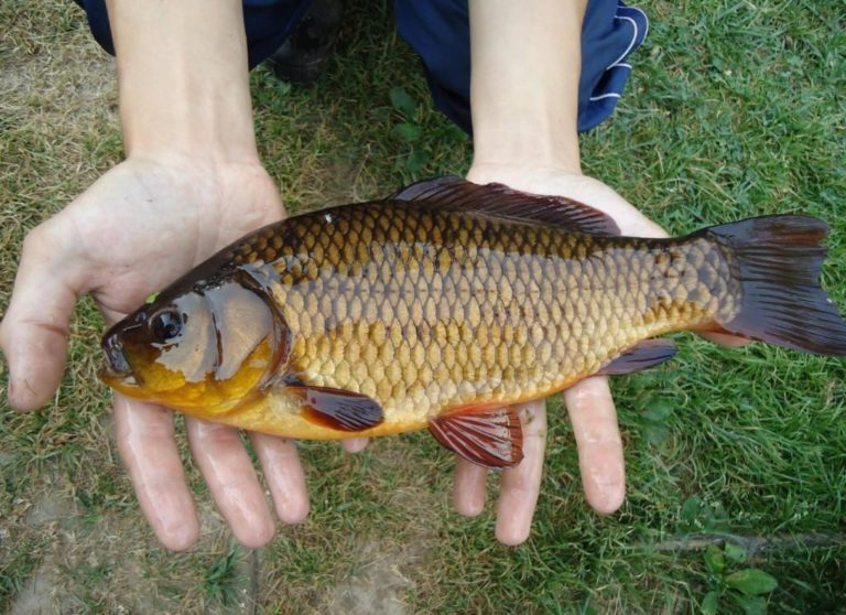болонская рыбалка на карася